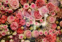 Flowers / by Javiera Godoy M