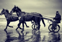 Horses on the beach, Deauville / by deauville