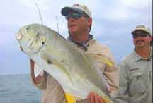 Fishing Training Online / by Alex Plastering Contractor