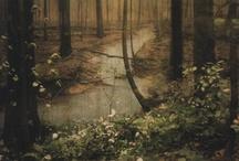 green dreams / by cori kindred