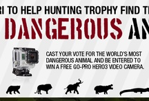 World's Most Dangerous Animals / by Hunting TrophyExperts