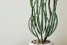 plants / by Ilse ...