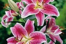 My favorite flowers / by Susanne Sheridan