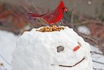 winter / by Vickie Hewett