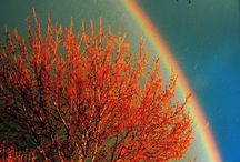 The seasons / by Leticia Contreras