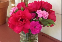 My Gardening / My yard and things from my garden/landscapes / by Summer LaForge Gardner