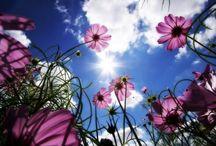 Flowers / by Rhea Helmreich