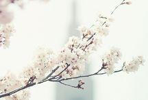 spring. / by A N E T T E S H U S . C O M