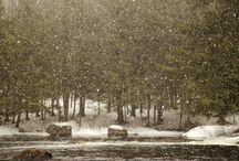 winter wonderland* Christmas / by Lis Baumann