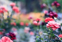 Beautiful Flowers / by Chalita