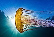 i'm a marine biologist ;) / by Mafer Barriga Aguirre