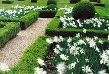 Garden Ideas / by Madel Reinhardt