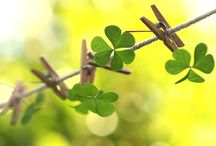 St. Patrick's Day / by Wens