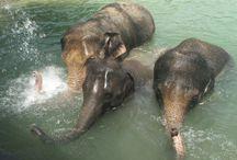 Elephants  / by Carol Di