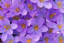 beautiful flowers / by Melissa Whitehurst