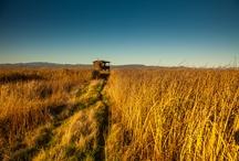 Wetlands / by Viansa Winery & Marketplace