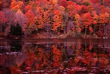 East Coast/Fall / by Michelle Simpson