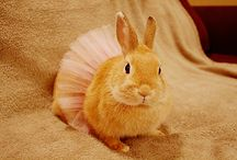 Hopping Down the Bunny Trail / Easter is almost here! Time to get inspired with colorful eggs, fluffy ducklings and of course bunnies in tutus :) / by All About Dance