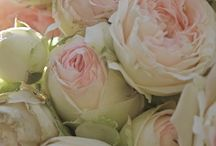 Wedding Ideas / by Amanda Meise