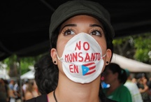 Puerto Rico Marcha contra Monsanto / by MiPuertoRicoVerde.com