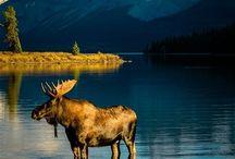 USA, ALASKA / by WDT