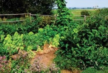 Gardening / by Healthy Beginnings Magazine