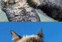 Grumpy Cat / by Marsha Flock