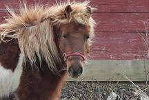 Horses / by Rachel Novak