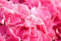 floral board: hydrangea / by The Perfect Petal