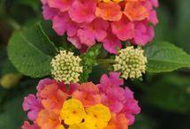 How Does My Garden Grow?? / My favorite work is yard work. I love my flowers. / by Missy Menard