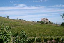 Castle of Torrechiara, near Parma / by Calogero Mira (CMTravelAnd)