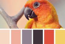Colorifics / by Bonnie Barnert