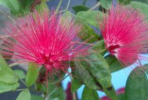 Flowers on Exhibit / by Tennessee Aquarium