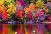 Colors of Fall ♡ / by Beauty on the Divide