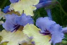 flowers / by Barbara Switzer