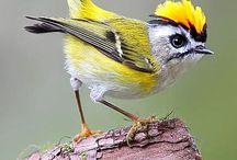 Birds / by Karen Beyer