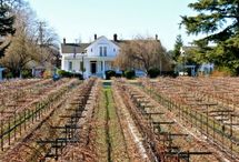 Wineries of Lodi, CA / Lodi is home to more than 80 wineries, over 60 of which feature onsite tasting rooms open to the public.  / by Lodi Wine