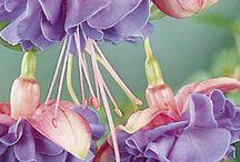 Flowers / by Kim Humbard