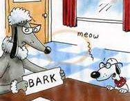 Funny / by Marzena Sturgeon