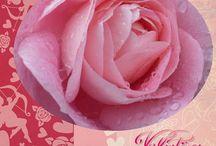 Kostenlose Bilder Valentinesday Valentine Love Flower / Sie finden auf dieser Seite #http://kostenlose-fotos-bilder-sprueche-legakulie.de/ #lizenzfreie, weil von mir selbst fotografierte und verschönerte #Bilder, kostenlos zum Download.  #beautiful #dream #flower #flowerpicture #nature  #love #photography #valentinesday #valentine http://kostenlose-fotos-bilder-sprueche-legakulie.de/impressum-agb.html  / by Sabine Eckhardt