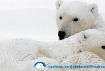 Facebook Covers / Polar bear covers for you to use on your Facebook page. / by Polar Bears International
