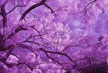 Death by Purple / by Stephanie Goodgyrl