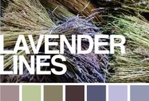 Colors / by Molly Widmann Vrba