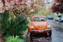Blossoms / by Joy BraveHeart ♥