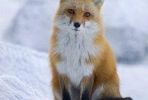 Fox / by Jackie @AmidorableCrochet