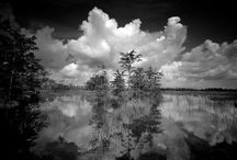 Clyde Butcher - Florida Landscapes / by Clyde Butcher Fine Art Photography