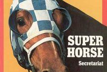 Equestrian Stuff :D / by Samii Elizabeth