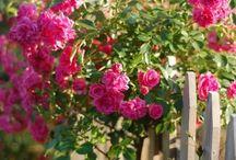 Gardening / by Charity Lewis-Vocker