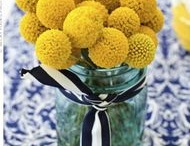 Wedding Colors: Navy and Canary / by Sara