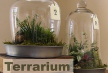 Terrarium Infatuation / All terrariums, all the time / by Andrea Craddock